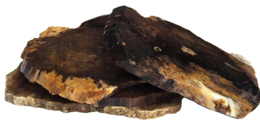 Set of four incredible coasters made from Oregon petrified wood.